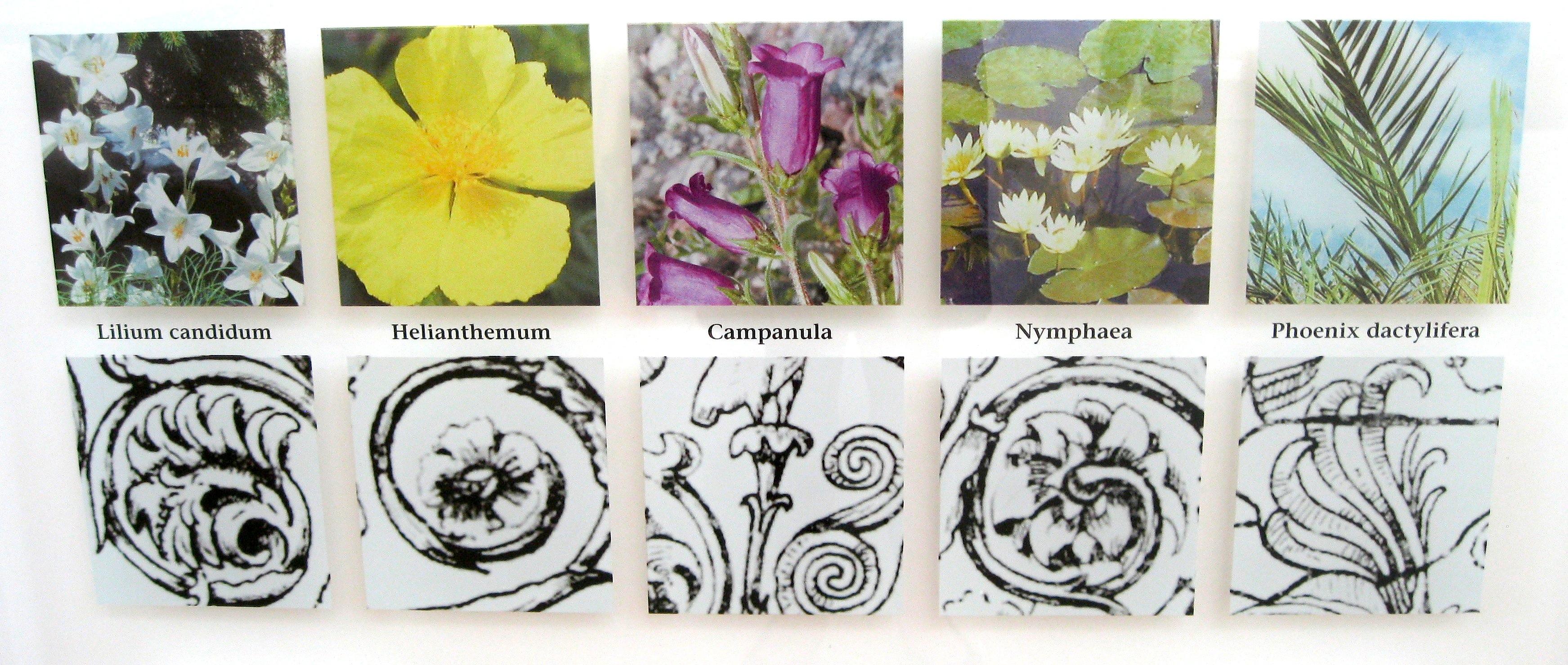 Ara Pacis Plants